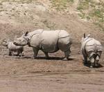 борьба с браконьерами в ЮАР