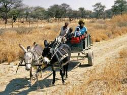 Народы Намибии - Дамара