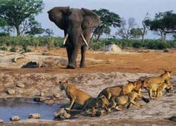 Самые красивые заповедники Зимбабве