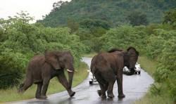 Африканские национальные парки