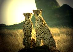Африканское сафари по парку Руаха